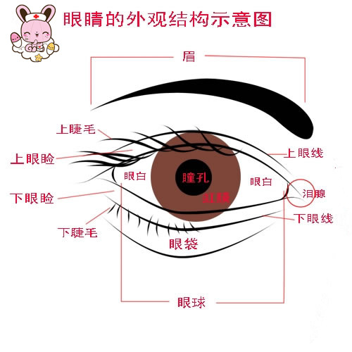 保护眼睛 从小做起-陕西科技大学幼儿园