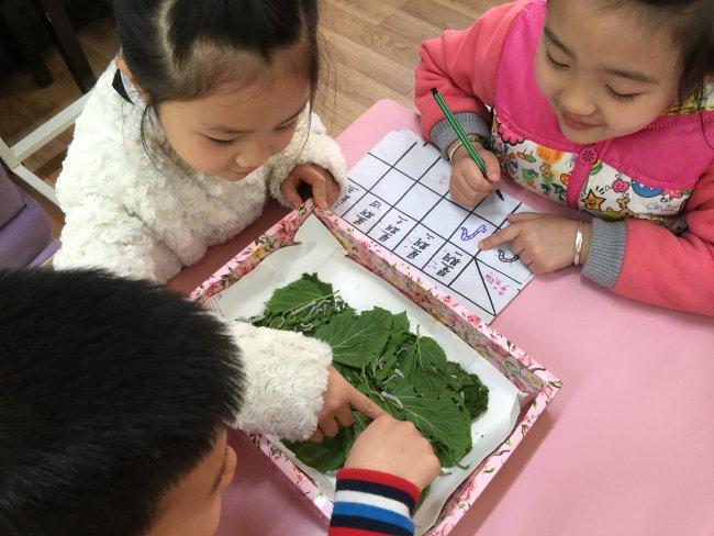 之饲养蚕宝宝-陕西科技大学幼儿园